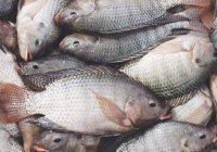 تحویل ماهیهای صید غیرمجاز به کمیته امداد