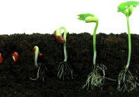 حمایت سازمان اوقاف از تولید بذر هیبرید و تکنولوژی های کشاورزی