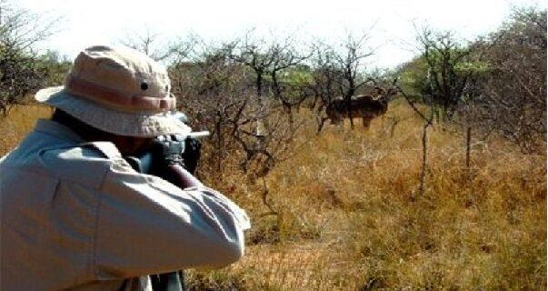 شکار و قاچاق حیات وحش در پوشش موسسات خیریه و سمن های محیط زیستی