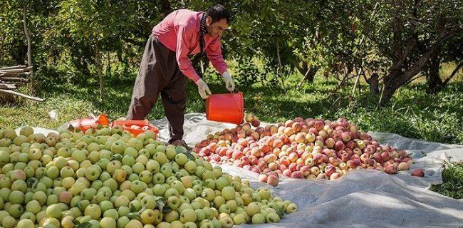 بزرگترین باغ موقوفه کشور مرهمی بر درد بیکاری در شهرستان آزادشهر