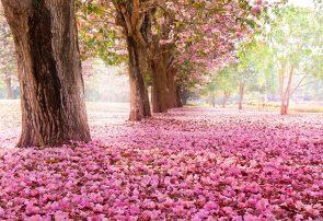 شعر نیکوکاری-مجموعه اشعار زیبا در مورد کار نیک